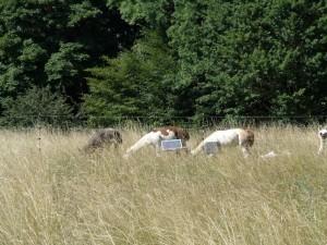 Alb-Lamas Heidepflege