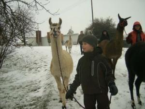 Alb-Lamas Lamawanderung